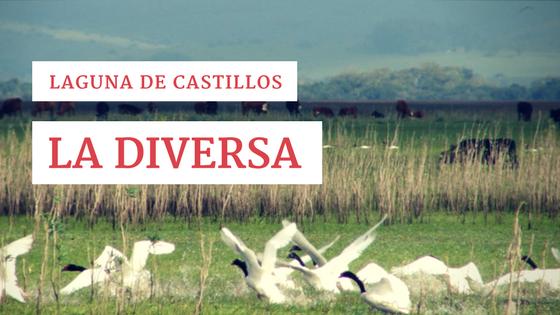 Laguna de Castillos: La diversa